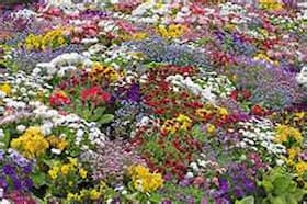 wildflower1.71160944_std-1.jpg