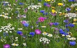 wildflower3.87145947_std-1-1.jpg