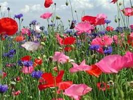 wildflower6.87145842_std-1.jpg